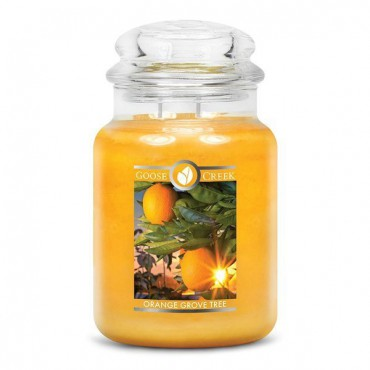 Duża świeca Orange Grove Tree Goose Creek Candle