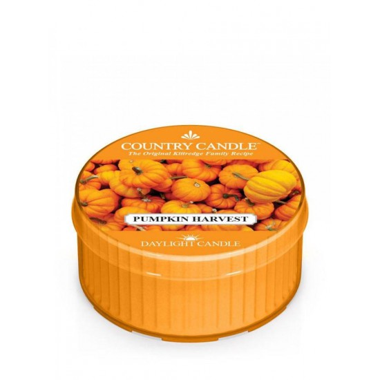 Daylight świeczka Pumpkin Harvest Country Candle